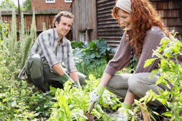 gagner de l'argent avec votre jardin